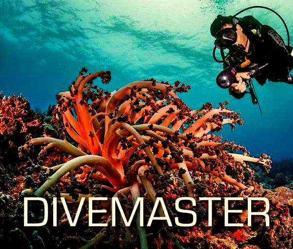 SSI Divemaster Course with Phuket Dive Tours