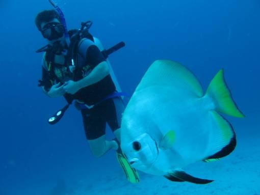 scuba diving with bat fish at racha yai island