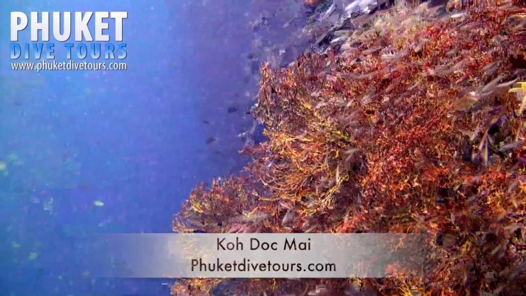 Koh Doc Mai Scuba Diving Phuket Thailand