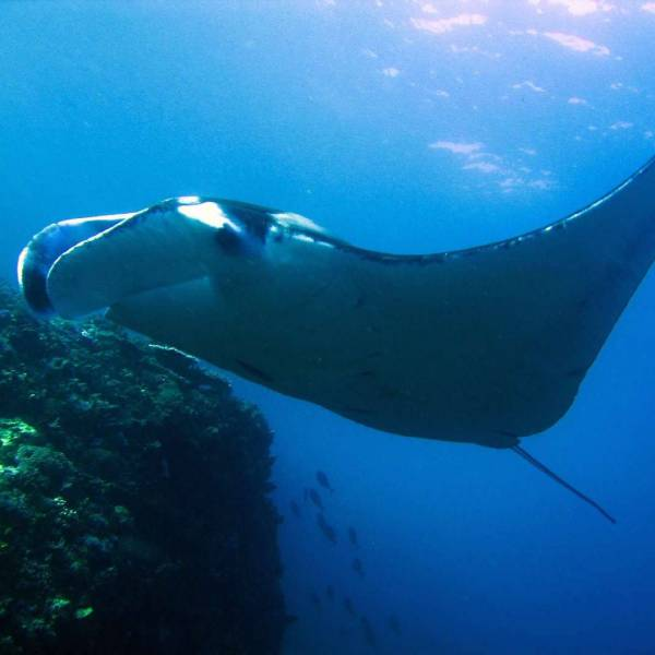 local-diving-phuket-thailand