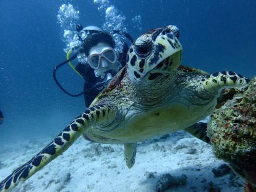 Racha Noi scuba diving with sea turtles