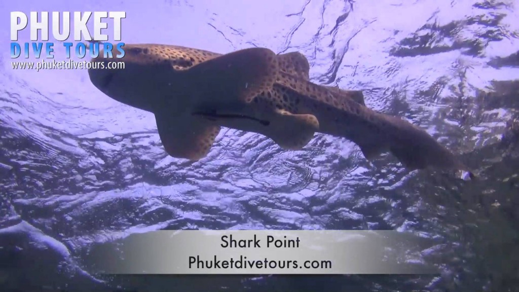 Shark Point Scuba diving Phuket Thailand