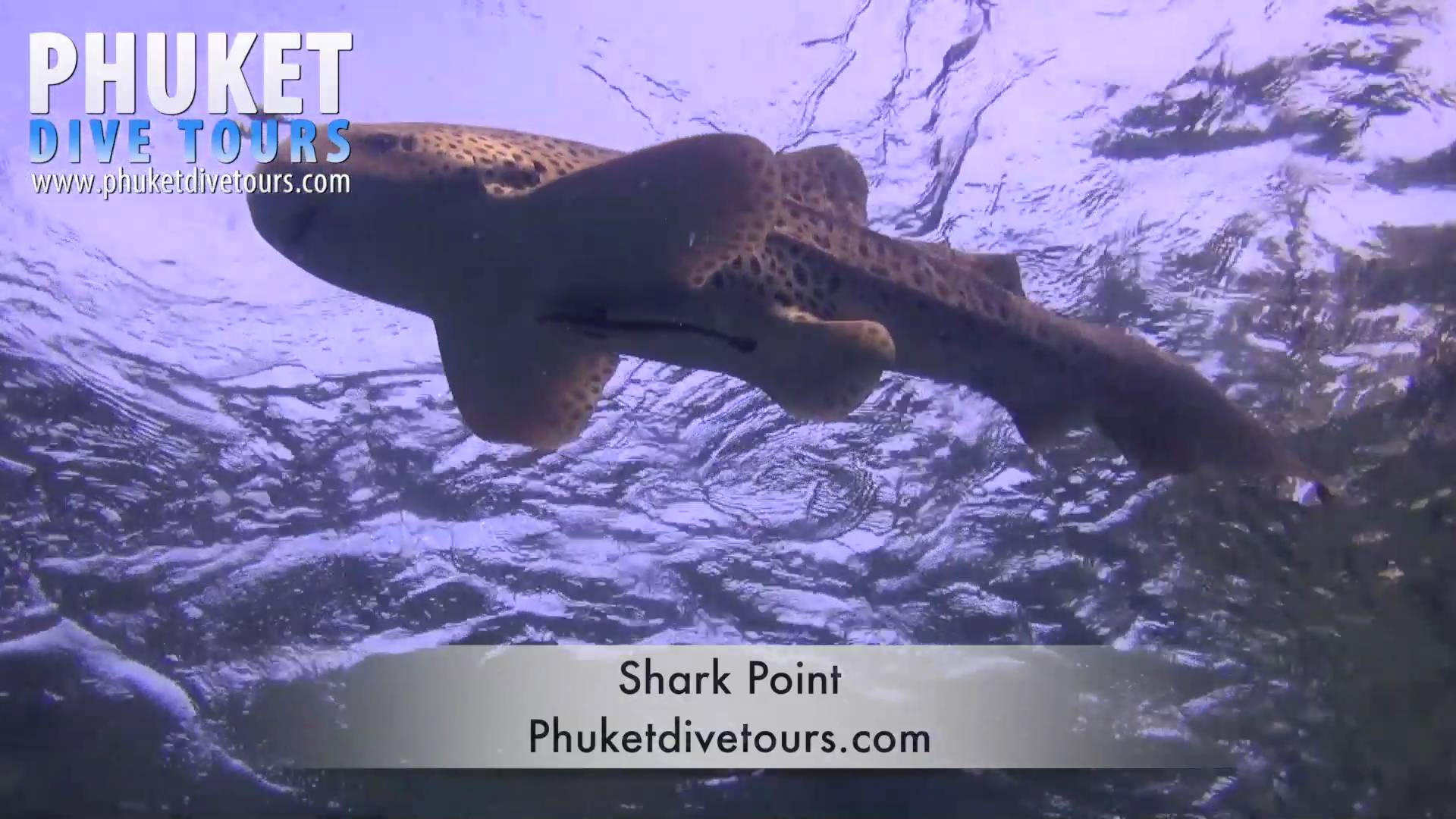 Shark Point Scuba diving Phuket Thailand