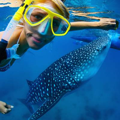 Snorkeling in the Similan Islands with Phuket Dive Tours