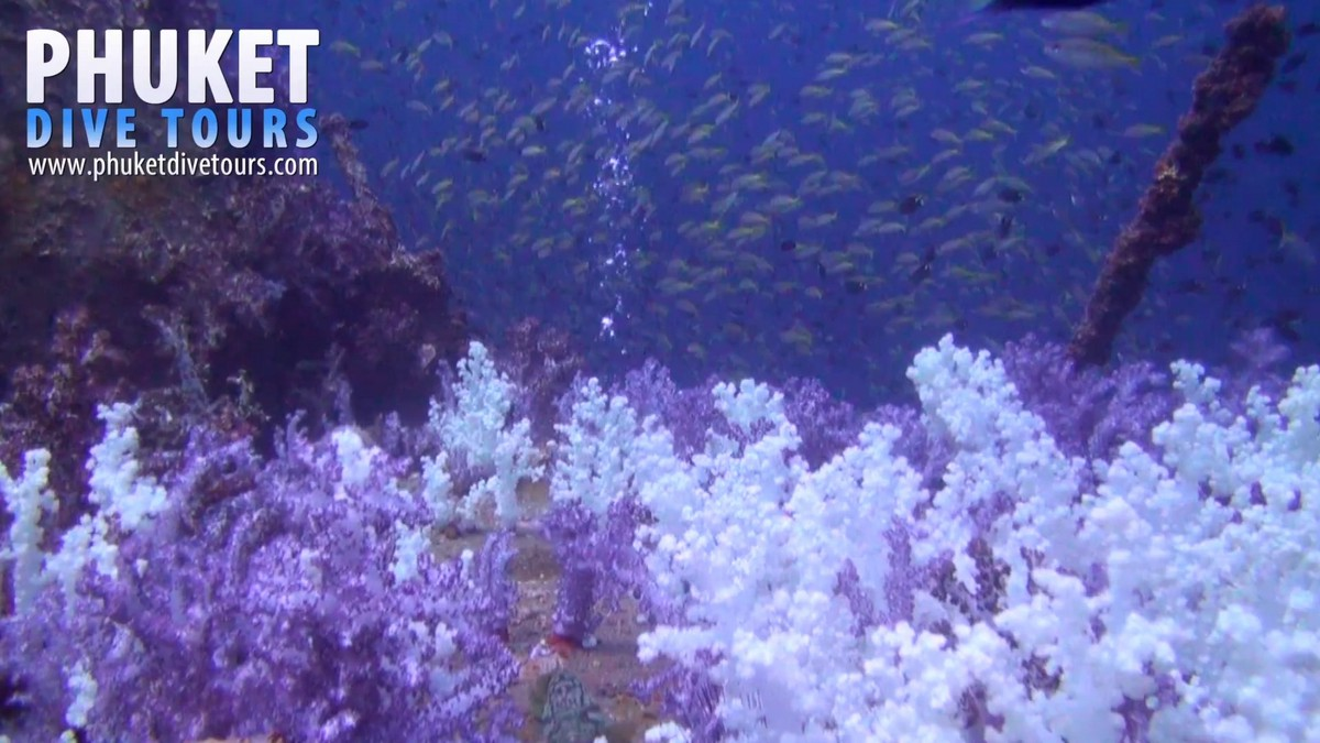 Soft Corals near to the decent line are very fragile