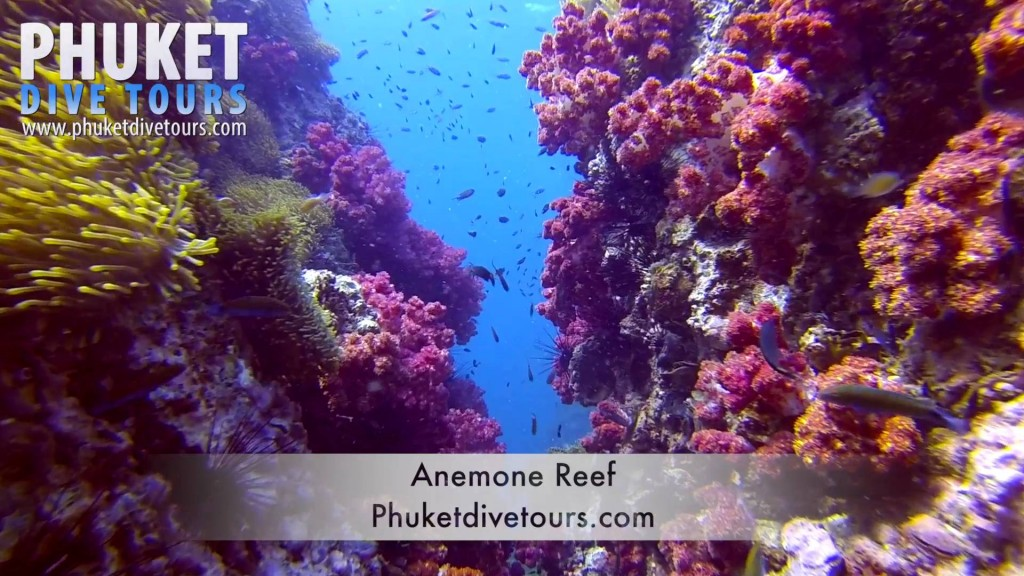 anemone reef scuba diving phuket Thailand