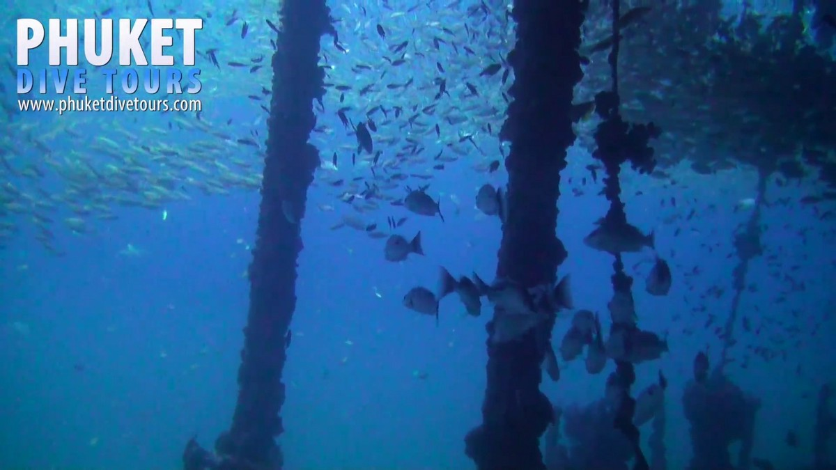 Scuba divers can swim through some parts of the king cruise but better check with the dive guide first