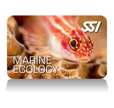 Free marine ecology course in phuket