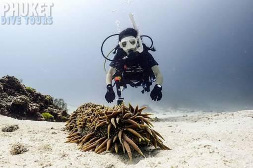 racha yai marine life