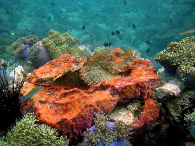 Diving phuket at shark point