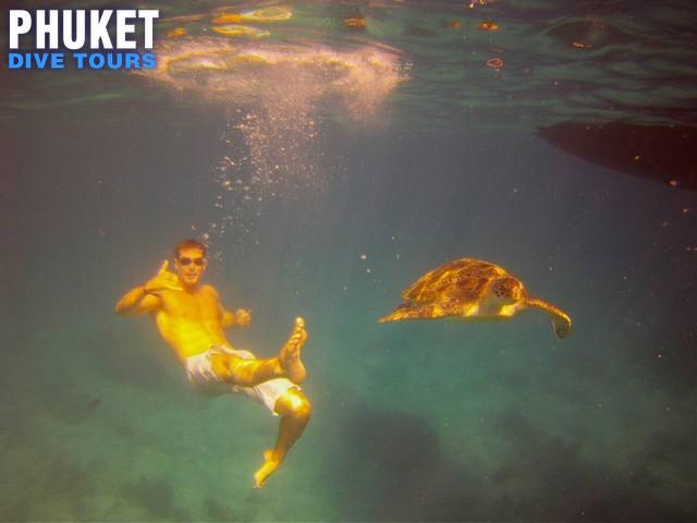 Similan Islands sea turtles