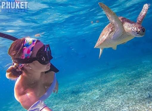 snorkeling with sea turtles in Phuket thailand
